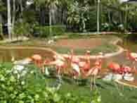 zoo2-195