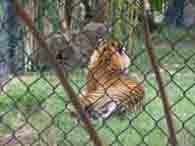 zoo4-195