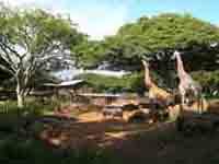 キリンや縞馬や犀等が同じエリアに暮らしているのが不思議でした。